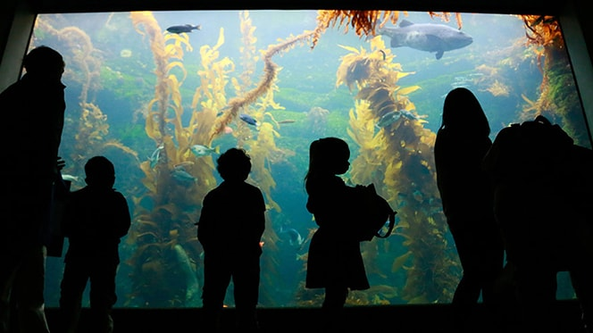 San Diego Wildlife: Birch Aquarium