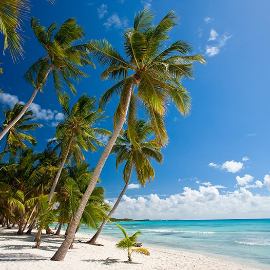 White sand beach with swaying palms