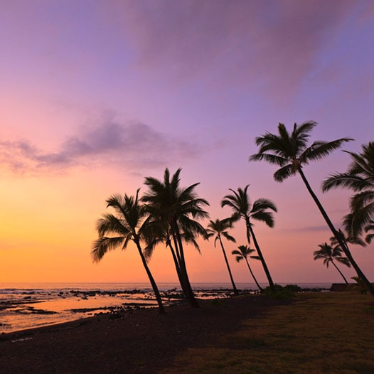 Silhouette of palm trees on the beach at sunset