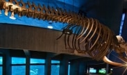 New England Aquarium Stay and Save