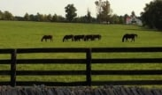 Guided Kentucky Horse Farm Tour Package