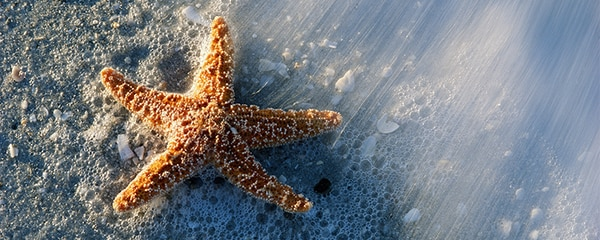 Starfish in the sand near Sanibel Island family hotels.