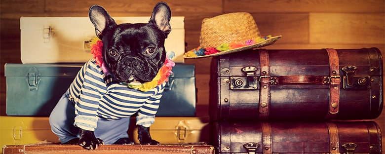 Best Pet Friendly Hotels Marriott International