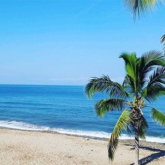Palm tree at the ocean.