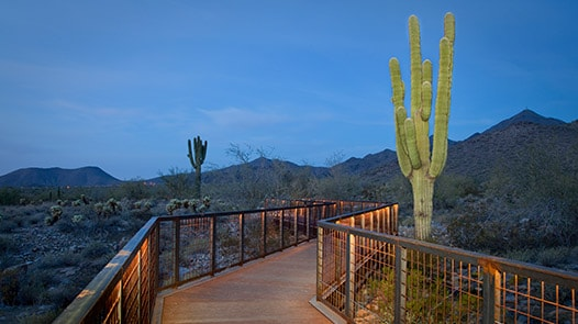 Pedestrian walkway and saguaro in desert