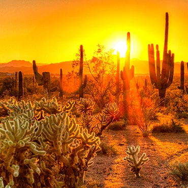 Desert sunset with cactus in background.