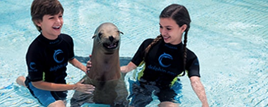 Two children swimming with a sea lion