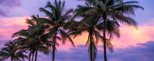 Florida Palms at Sunset