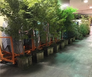 Row of trees - green conferences