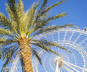 The Orlando Eye - near Gaylord Palms Resort