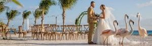 Bride and Groom in a beachfront wedding setup with flamingos in the forefront and ocean view