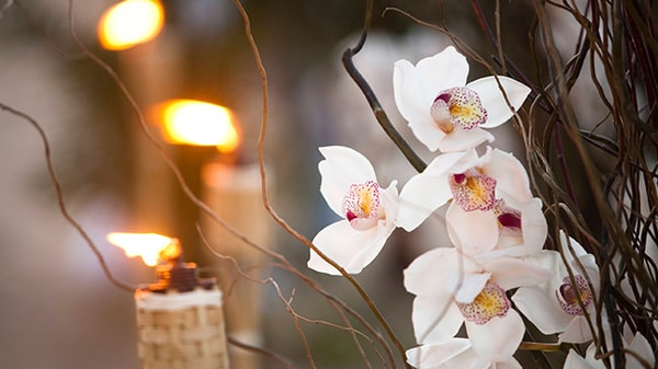 An orchid plant and lit candles