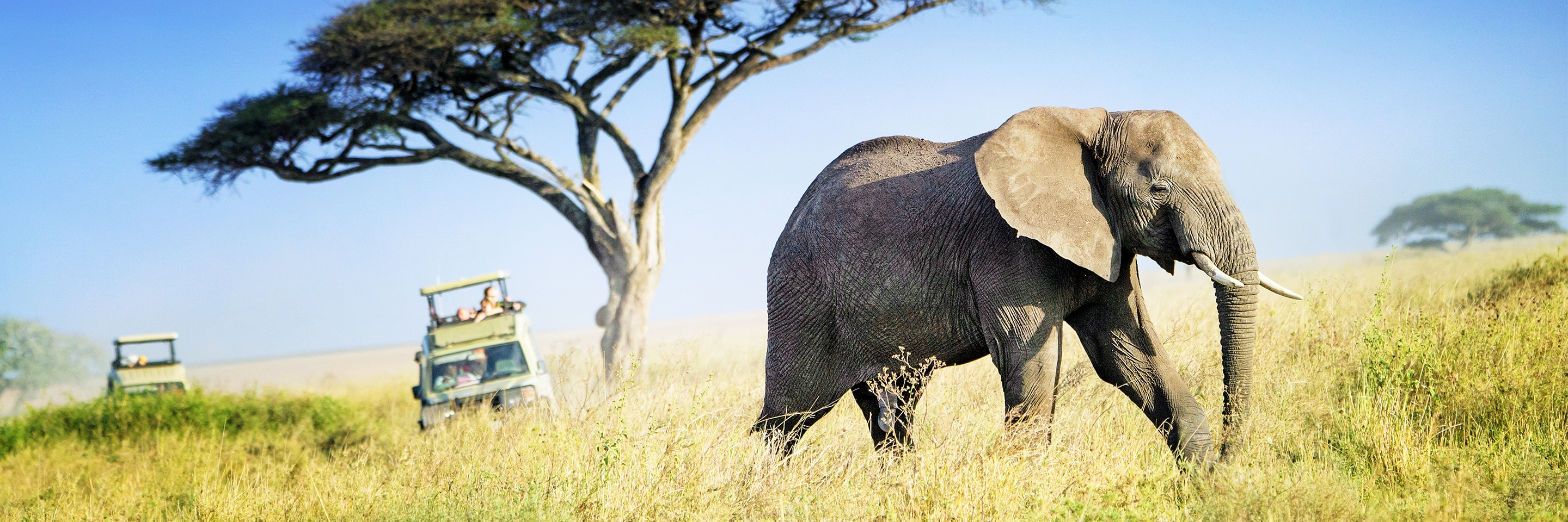Elephant seen on African safari adventure.