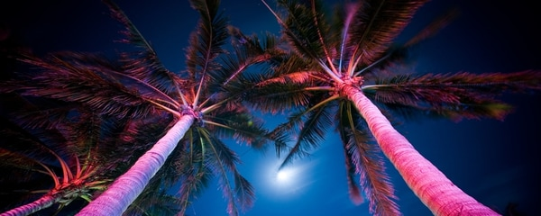Palmeras al anochecer Miami