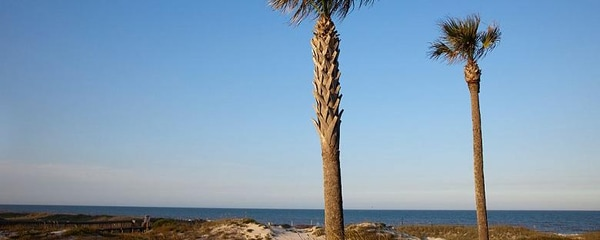 A couple of palm trees on the beaches of Amelia Island in Florida.
