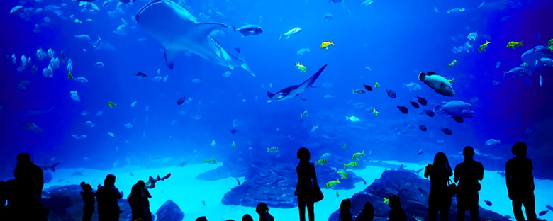 View of Georgia Aquarium filled with colorful fish and sharks being watched by silhouettes.
