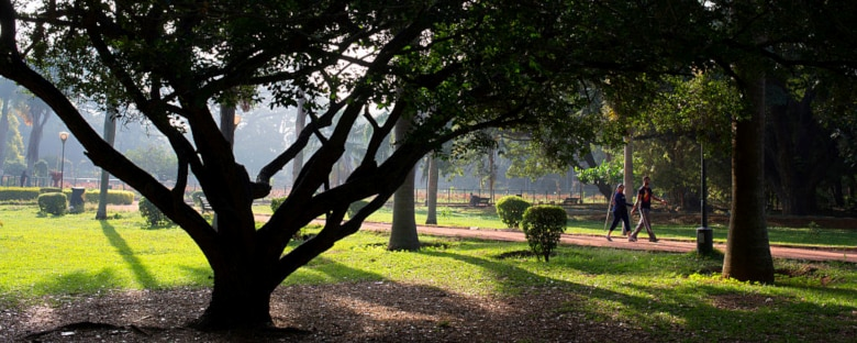 Walking trails through botanical gardens in Bangalore.