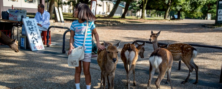 A young girl feeding deer at a park in Nara, Japan.