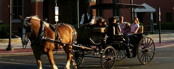 A horse-drawn carriage ride around Amelia Island.