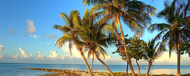 Palm trees on a beach in Key West.