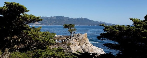 Full view of Lone Cypress on a sunny day with mountains in the background in Monterey.