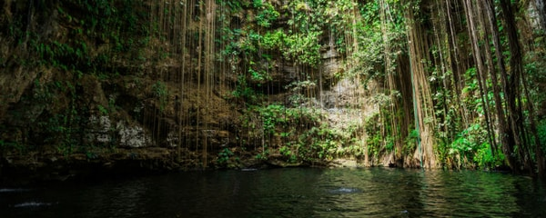 Vines hang down into a cenote in Mexico