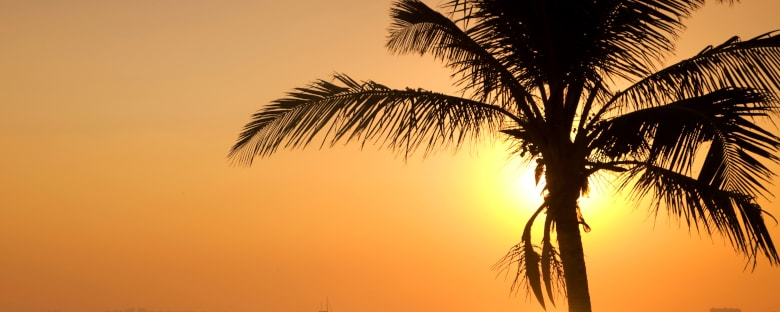 A palm tree in the sunset on the shore of Key Biscayne in Florida.