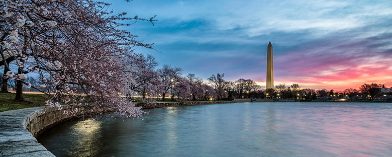 View of cherry blossom tree hanging over the water with the Washington Monument in the background.