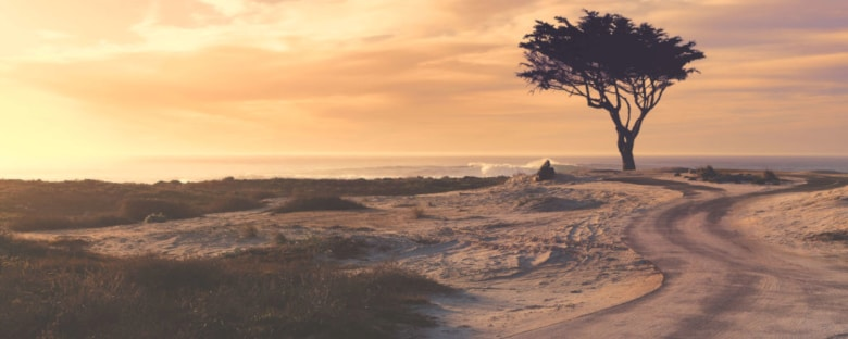 Full view of a single cypress tree by the Pacific Ocean under a cloudy sunrise sky in Monterey.