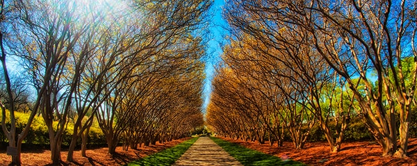 Eye level view of a walking path lines by trees with blue sky above in Dallas, Texas.