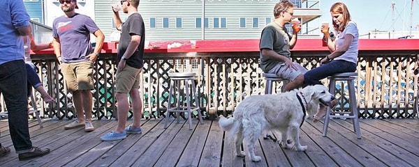 A dog joins diners on the back patio of a dog-friendly restaurant in Portland