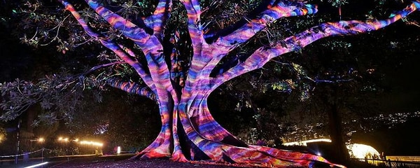 A tree is decorated for the Garden of Light display in Sydney, Australia