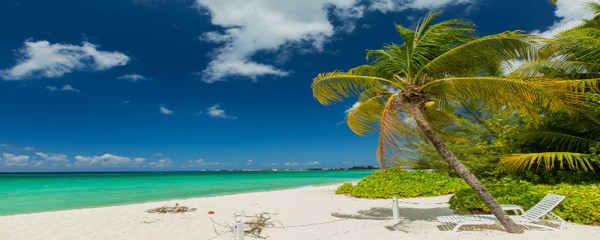 Palm trees being blown in the wind on the beach in the Cayman Islands.