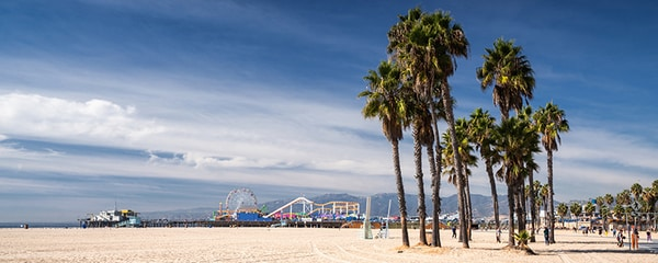 A sunny day on a Los Angeles beach filled with palm trees.