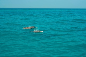 Dolphin Sighting