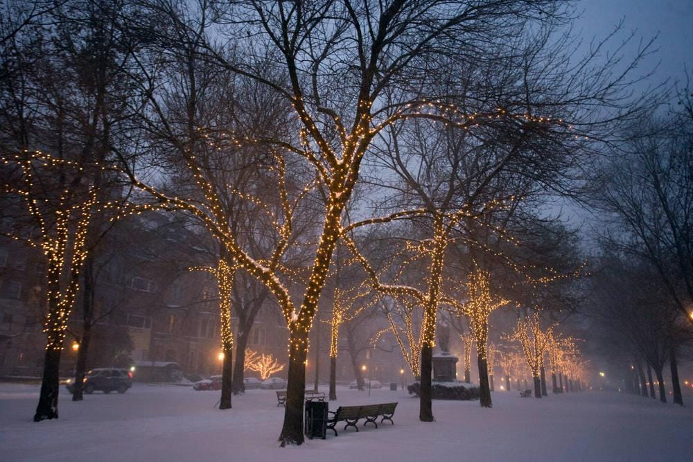 Snow Covered Commonwealth Avenue Mall
