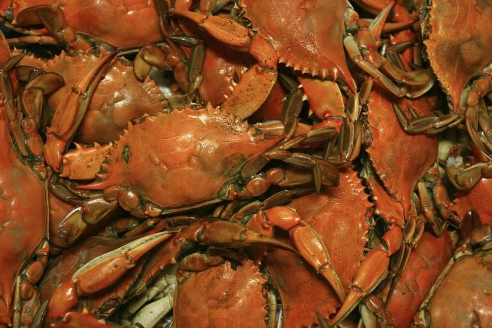 Famous Steamed Crabs