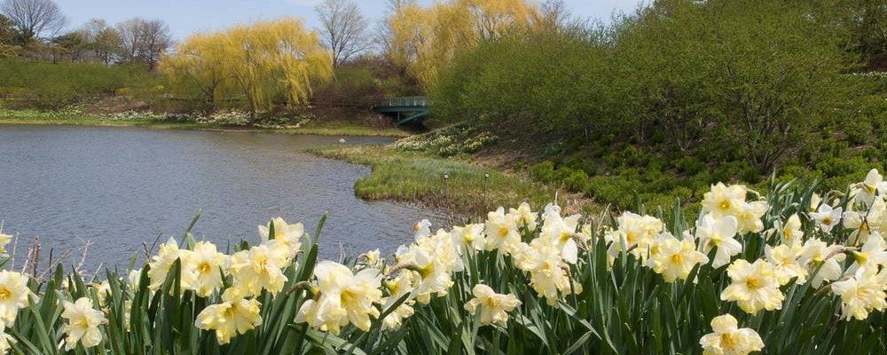 Botanischer Garten in Chicago