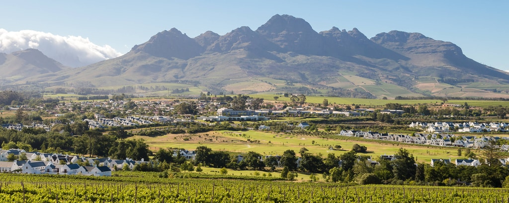 Mountain and vineyard view