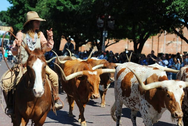 Fort Worth Stockyards – Cattle Drive