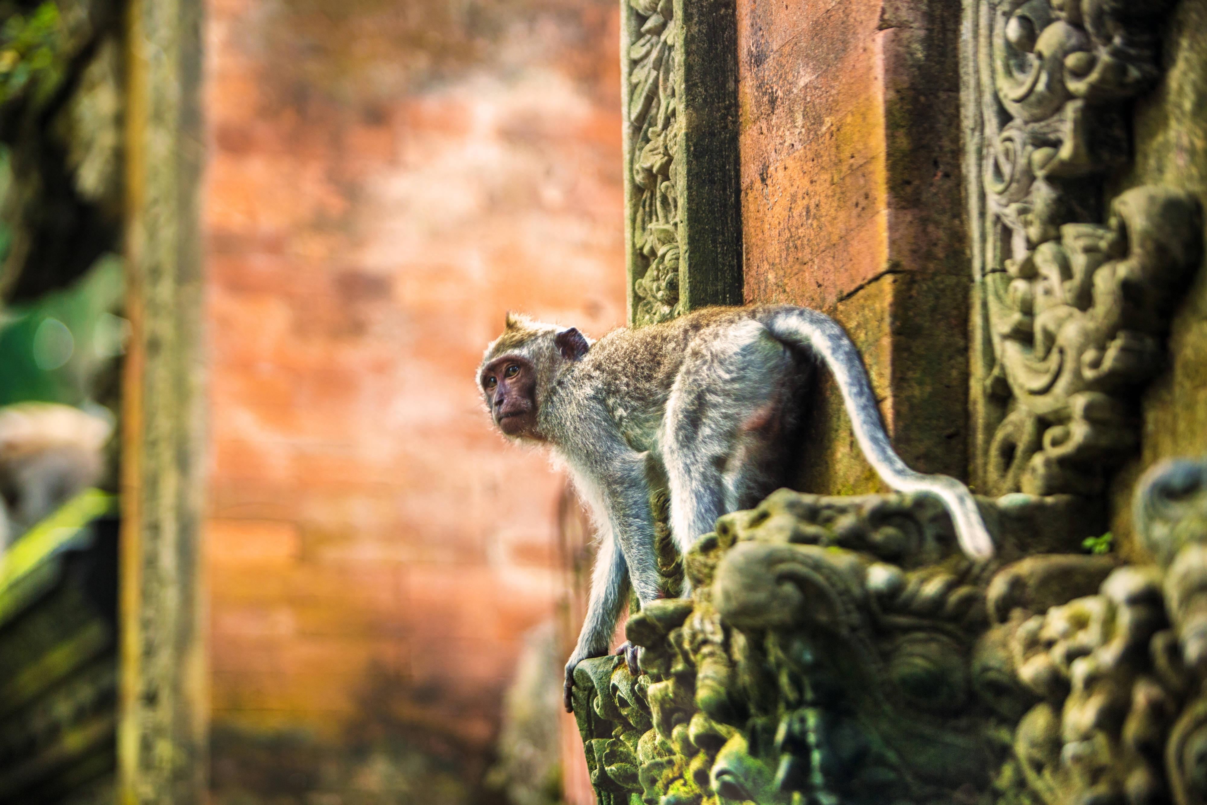 Monkey Forest - Ubud Bali