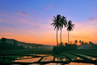 Rice Field During Sun Rise