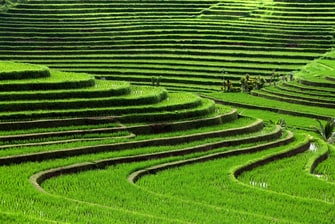 The Lush Rice Field in Jatiluwih Village