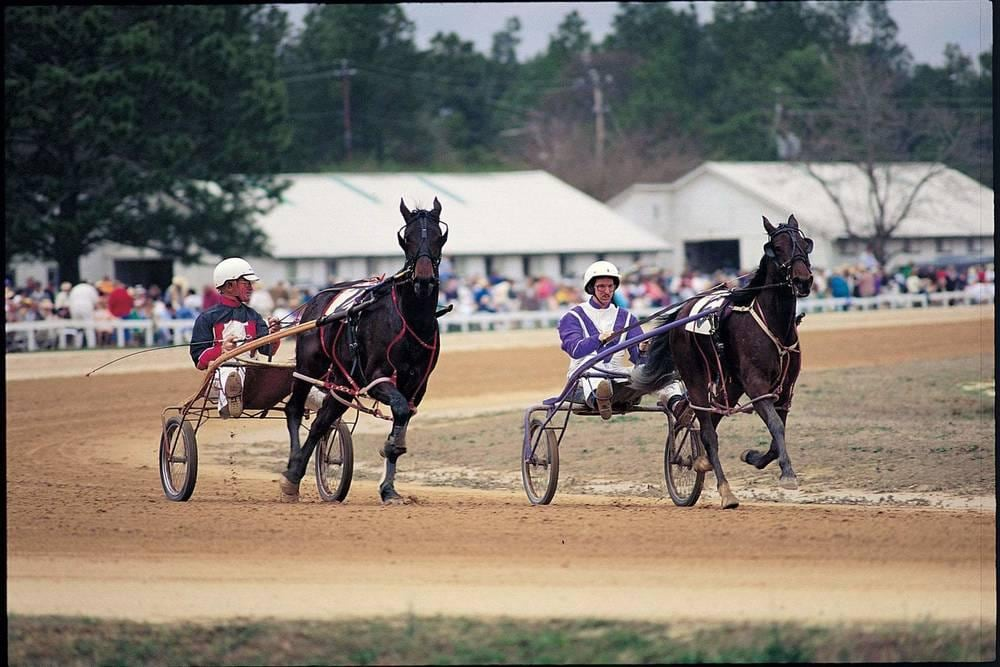 Harness Racers