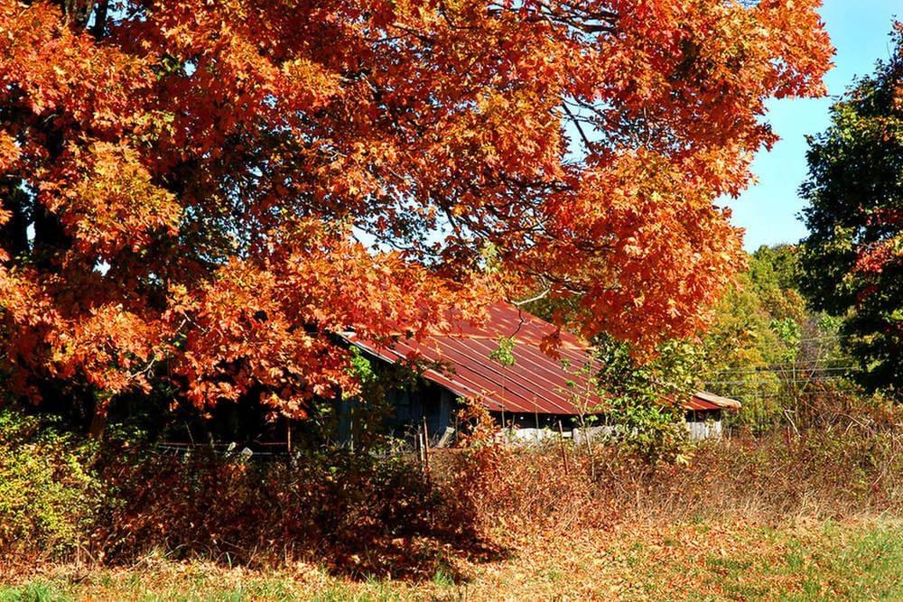 Fayetteville fall foliage hotel