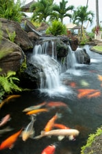Pictures of hotels in or near lahaina take a photo tour for Koi pool and sauna