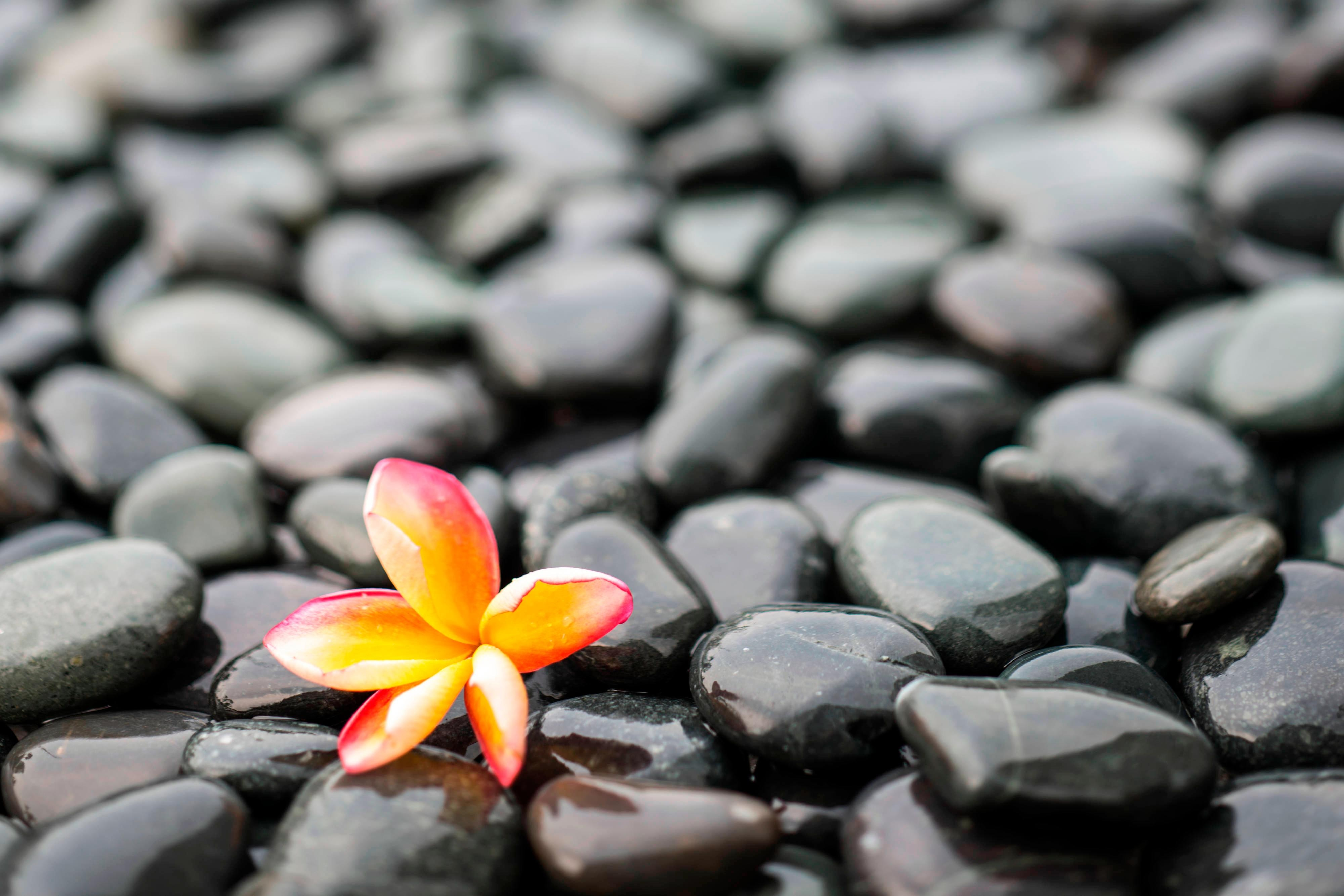 A sprig of orchid on rocks