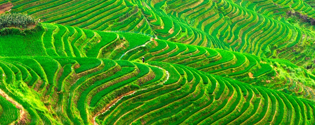 Longsheng Rice Terrace Field