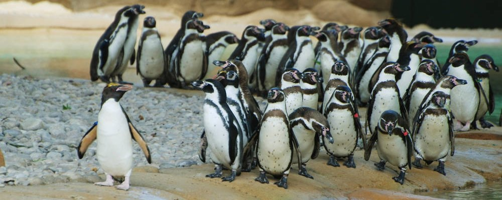 Penguin Beach – Zoológico de Londres