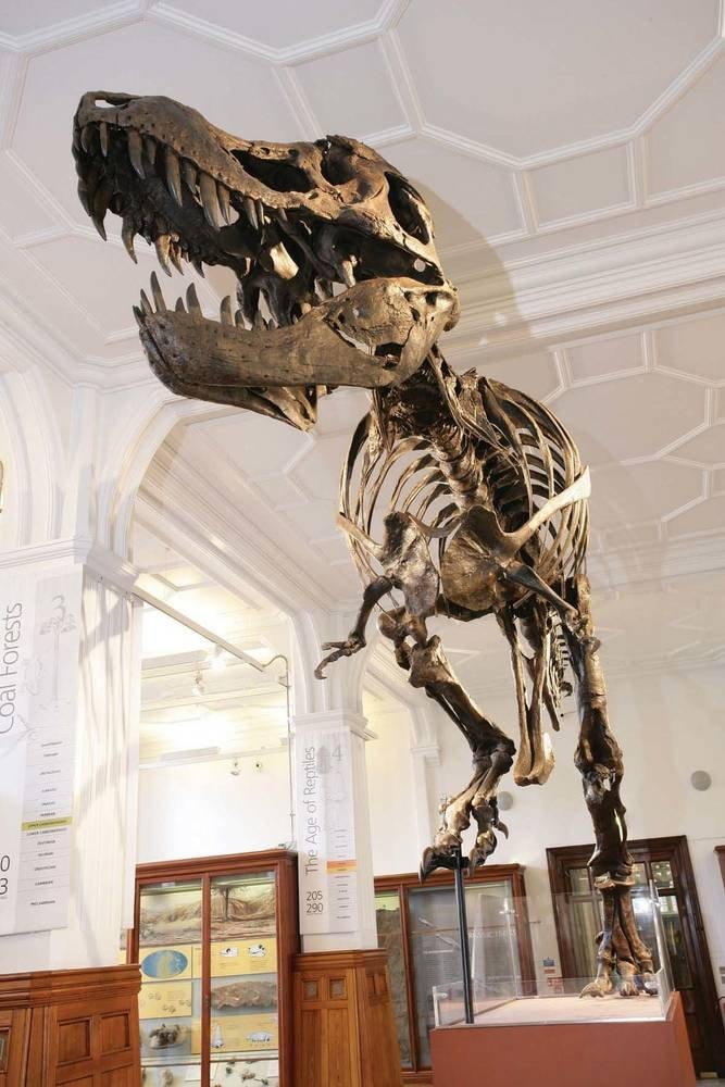 Manchester museum- Pre Historic Gallery